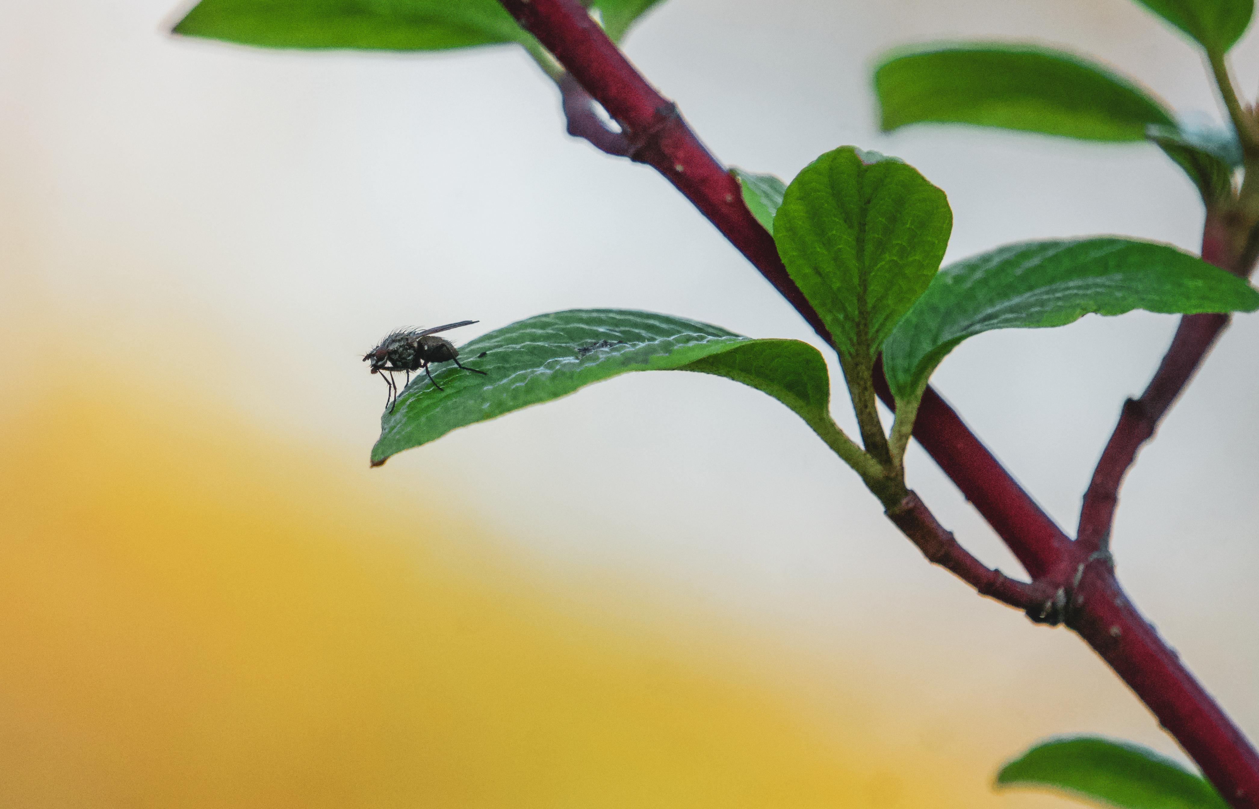 299. Insekten im Garten